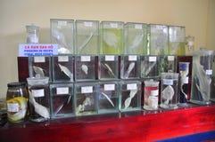各种各样的鱼弄干保存的标本和在液体的海洋生活被存放并且显示给Oce的越南机关的游人 库存图片