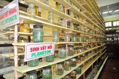 各种各样的鱼弄干保存的标本和在液体的海洋生活被存放并且显示给Oce的越南机关的游人 库存照片