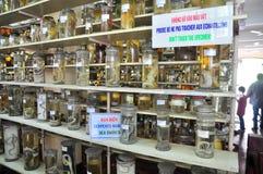 各种各样的鱼弄干保存的标本和在液体的海洋生活被存放并且显示给Oce的越南机关的游人 免版税库存图片