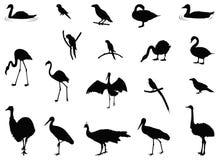 各种各样的鸟剪影 皇族释放例证