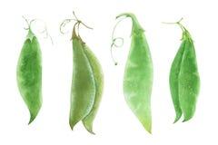 各种各样的水彩绿色梨荚 库存图片