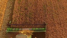 组合切口麦子,顶视图 股票录像