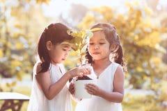 结合在一起使在罐的两个亚裔小孩女孩年轻树 免版税图库摄影