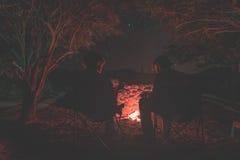 结合坐在灼烧的阵营火夜 野营在森林里在满天星斗的天空下,纳米比亚,非洲 夏天冒险和e 库存照片