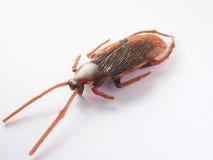 合成橡胶蟑螂 库存照片