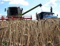 组合捶打了冬天wheat_3 库存图片
