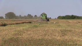 组合收获成熟干燥pease植物 鹳鸟 股票录像