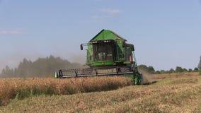 组合收获豌豆植物 股票视频