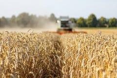 组合收获麦子 库存照片