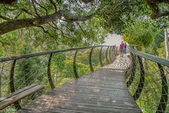 结合走在开普敦植物园桥梁  库存照片
