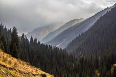 吉尔吉斯斯坦的有雾的森林 免版税库存图片