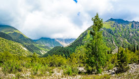 吉尔吉斯斯坦自然,格里峡谷 库存照片
