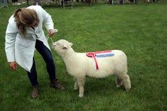 吉尔福德,英国- 2018年5月28日:妇女交配动物者和她的奖wi 库存图片