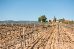 吉恩利昂酿酒厂和wineyards 库存照片
