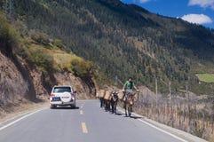 吉普和西藏人 图库摄影