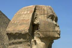 吉萨棉伟大的狮身人面象的极大的头在吉萨棉在开罗,埃及 库存图片