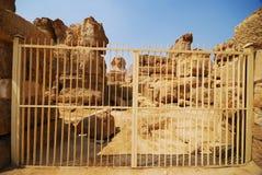 吉萨棉狮身人面象 免版税库存图片