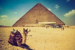 吉萨棉金字塔的看法,游人临近他们和在前景的骆驼 埃及 开罗 免版税库存照片