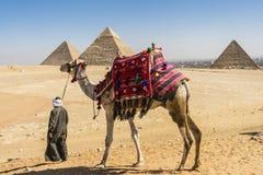 吉萨棉,埃及金字塔全视图  免版税图库摄影