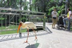 吉隆坡飞禽公园,马来西亚 图库摄影
