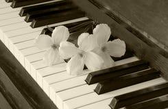 吊唁卡片-在钢琴的花 免版税库存图片