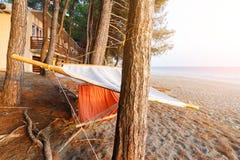 吊床位于在杉木之间在旅馆附近海滩黑海作为安静的舒适的休息的标志 免版税库存照片