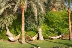 吊床和棕榈树。 免版税库存照片