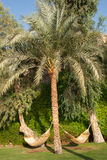 吊床和棕榈树。 免版税库存图片