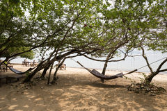 吊床在一棵树的树荫下在海滩的 免版税库存图片