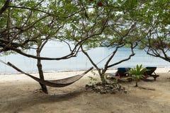 吊床在一棵树的树荫下在海滩的 库存图片