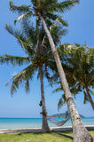吊床在棕榈树树荫下  免版税库存图片
