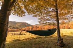 吊床在森林 免版税库存图片