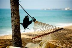 吊床在海滩的放松与乌鸦和海洋 库存图片