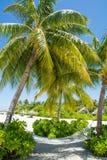 吊床在热带海滩的棕榈树下在马尔代夫 免版税库存照片