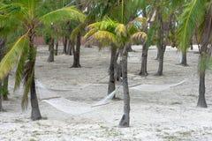 吊床栓了对棕榈树在一个热带海岛 库存照片