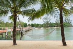 吊床被栓对椰子树 库存图片