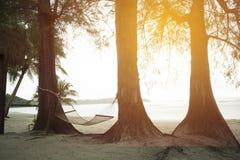吊床附有杉树由海 库存图片