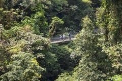 吊桥在哥斯达黎加密林 库存图片