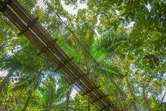 吊桥在森林里 免版税图库摄影