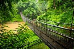 吊桥在清迈附近的密林 库存图片