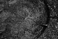 同心环样式 在混凝土的木版本记录 免版税库存照片