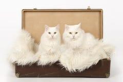 同时在篮子、父亲和女儿火鸡安哥拉猫 库存照片