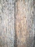 同样的概念,但是不同 在树的两自然颜色口气 免版税库存图片