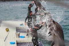同步的海豚 库存照片