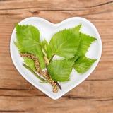 同种疗法和烹调与桦树,桦属 免版税库存图片