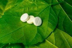 同种疗法药物天生,在一片绿色叶子 库存图片