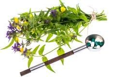 同种疗法 草本胶囊,白色backgroun的药用植物 库存照片