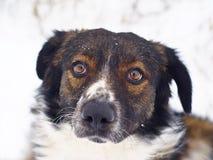 同色而浓淡不同的棕色和白色狗地面 库存照片