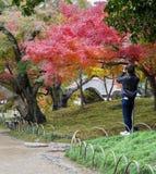后乐园庭院的秋天颜色在冈山,日本 库存图片