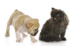 后侧方小猫小狗嗅 免版税图库摄影